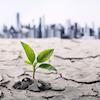 Será 2019 o ano da transformação ágil?