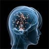 O Elefante na sala: Usando a Neurociência para Aprimorar os Relacionamentos no Trabalho