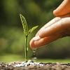 Growing Agile… Not Scaling!