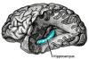 学習の科学: 脳にとって最善のアプローチ