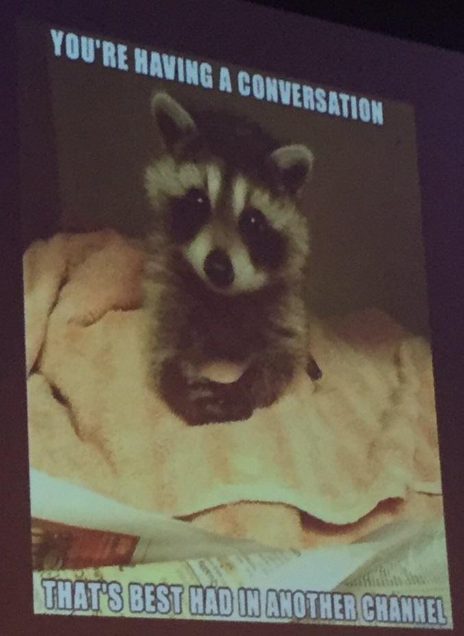 The Slack Raccoon
